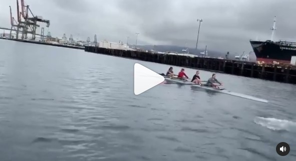 When the sea lions challenge us to a race!