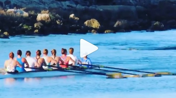 Rowing plus Dolphins: Perfect Together